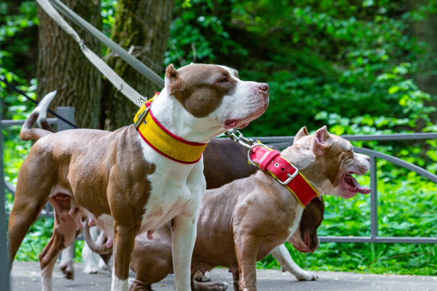 Kutyák nyakörvben
